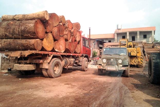 ການລັກລອບຕັດໄມ້ ແລະ ຊື້-ຂາຍສັດນໍ້າ-ສັດປ່າ ຍັງພົບເຫັນຫຼາຍ  - F Loggings - Laophattananews