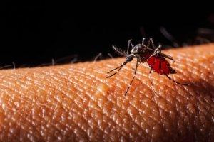 ພຽງມື້ດຽວມີຜູ້ຕິດເຊື້ອໄຂ້ຍຸງລາຍ 67 ກໍລະນີ - mosquito sucking blood 50411 16 300x200 - ພຽງມື້ດຽວມີຜູ້ຕິດເຊື້ອໄຂ້ຍຸງລາຍ 67 ກໍລະນີ