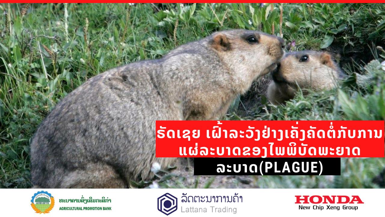 ຣັດເຊຍເຝົ້າລະວັງ ໄພພິບັດພະຍາດລະບາດ (plague) -                                                                       4                                               38 - ຣັດເຊຍເຝົ້າລະວັງ ໄພພິບັດພະຍາດລະບາດ (Plague)