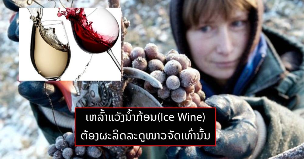 ລະດູໜາວທີ່ອຸ່ນຂຶ້ນ ເຮັດໃຫ້ເຢຍລະມັນບໍ່ສາມາດຜະລິດເຫລົ້າແວັງນໍ້າກ້ອນ(ice wine)ໄດ້ - 555 56 - ລະດູໜາວທີ່ອຸ່ນຂຶ້ນ ເຮັດໃຫ້ເຢຍລະມັນບໍ່ສາມາດຜະລິດເຫລົ້າແວັງນໍ້າກ້ອນ(Ice Wine)ໄດ້