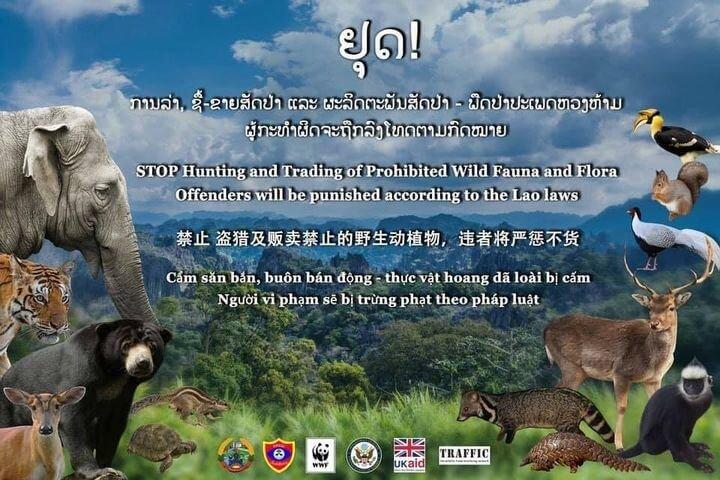 WWF-Laos ສະໜັບສະໜູນຜະລິດ ແລະ ຕິດຕັ້ງປ້າຍໂຄສະນາ ພ້ອມໂປສເຕີ ວຽກງານສະກັດກັ້ນການຄ້າ-ຂາຍສັດປ່າ ທີ່ຜິດກົດໝາຍ - 123137774 397552258050572 6738135571737806566 n - WWF-Laos ສະໜັບສະໜູນຜະລິດ ແລະ ຕິດຕັ້ງປ້າຍໂຄສະນາ ພ້ອມໂປສເຕີ ວຽກງານສະກັດກັ້ນການຄ້າ-ຂາຍສັດປ່າ ທີ່ຜິດກົດໝາຍ