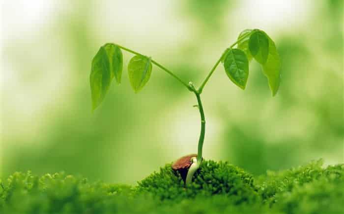 - Plant green shoots eye computer desktop wallpaper 03 medium - ຮ່ວມແຮງຮ່ວມໃຈປູກຕົ້ນໄມ້ໃຫ້ເປັນປ່າເພື່ອອະນາຄົດຂອງປະເທດຊາດ