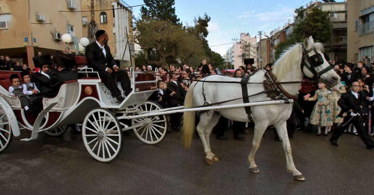 ອິສຣາເອລວິໄຈພົບມ້າຕິດເຊື້ອໄວຣັສໂຄໂຣນາຄັ້ງທຳອິດ - israel research found horse infect coronavirus first time - ອິສຣາເອລວິໄຈພົບມ້າຕິດເຊື້ອໄວຣັສໂຄໂຣນາຄັ້ງທຳອິດ