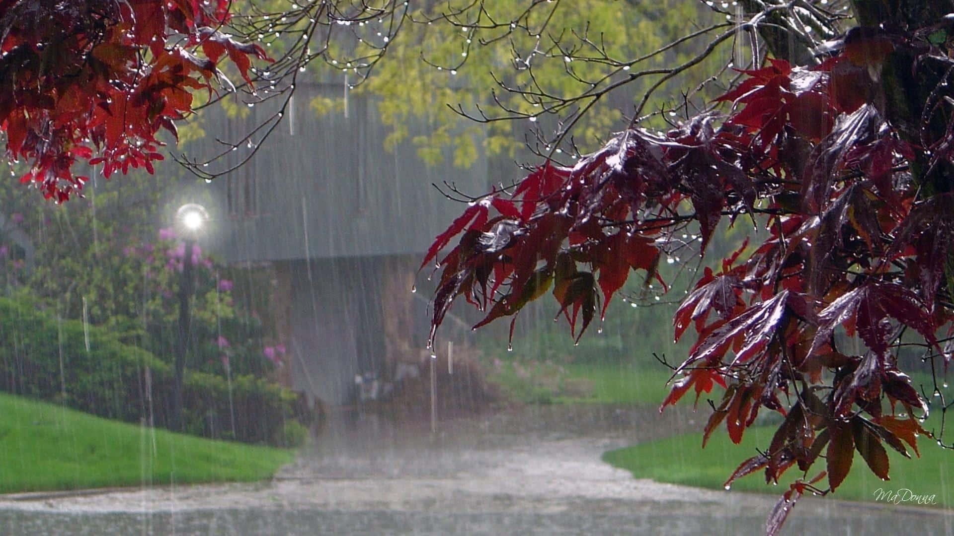 - cold fall rain - ອຸຕຸເຕືອນ! ວັນທີ 7-13 ມິຖຸນານີ້ ຈະມີຝົນຕົກຟ້າຮ້ອງຟ້າເຫຼື້ອມຢູ່ທົ່ວທຸກພາກ